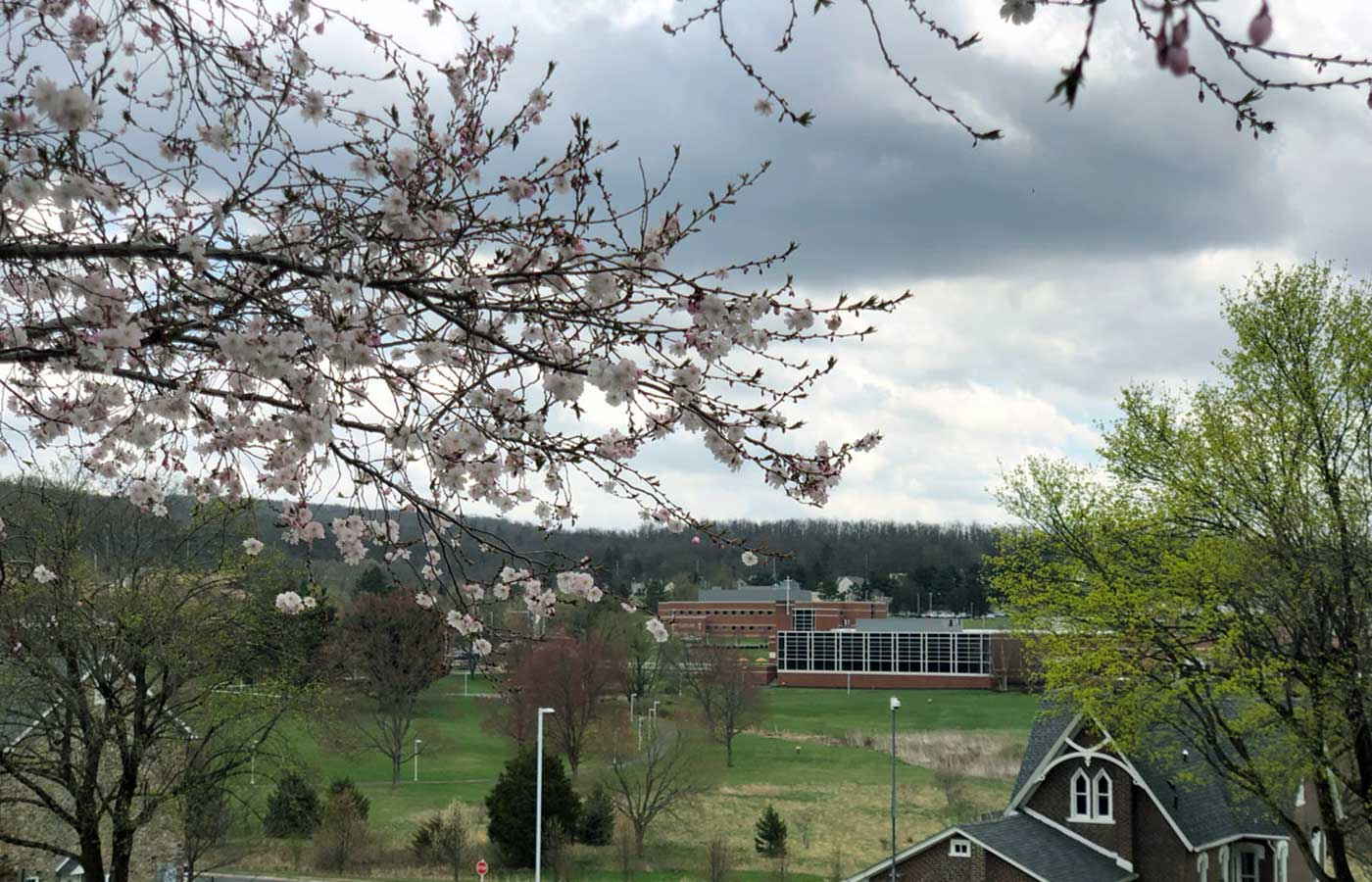 Cherry Blossoms Overlooking the DUC