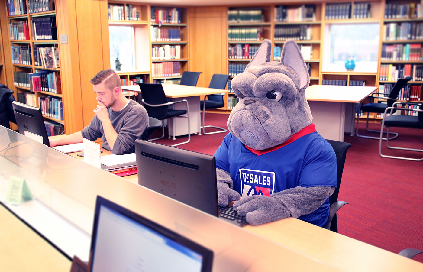 DSU Bulldog Studies for finals